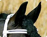 Vacunas caballos frisón